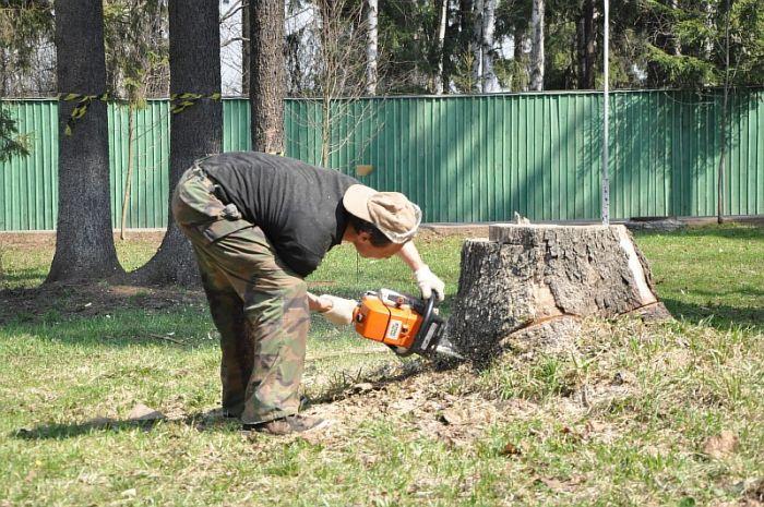 Недвижимость Аренда сколько стоит выкорчевать деревья на участке 10 соток огни
