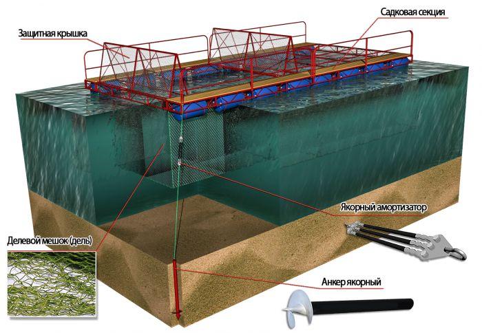 рыболовное хозяйство строит бассейн для разведения рыбы бассейн имеет